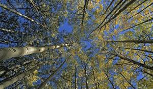 Lemker Trees FOL
